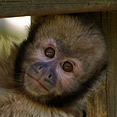 photos de singes